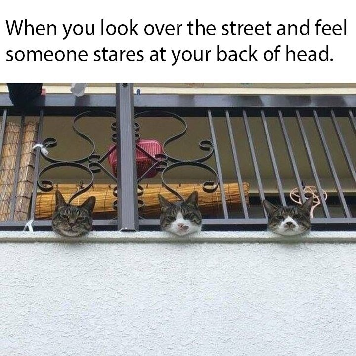 Cat - When you look over the street and feel someone stares at your back of head.