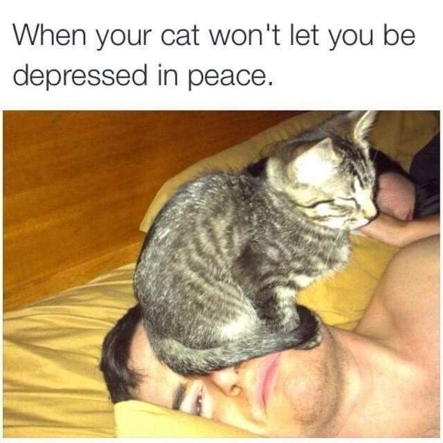 Cat - When your cat won't let you be depressed in peace.