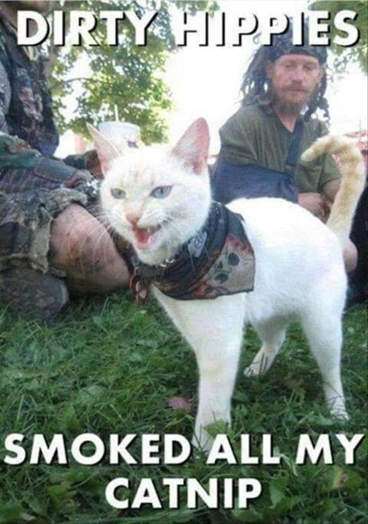 Cat - DIRTY FIPPIES SMOKED ALL MY CATNIP