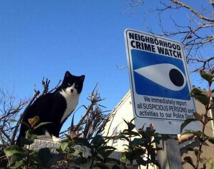 Cat - NEIGHBORHOOD CRIME WATCH We immediately report all SUSPICIOUS PERSONS and activities to our Police Den