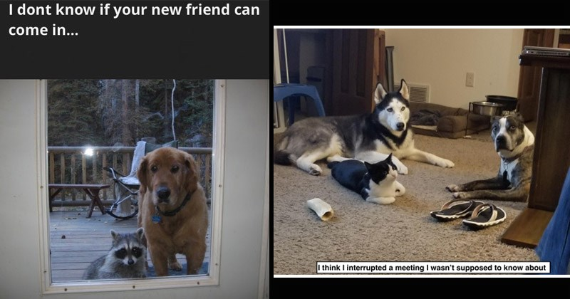 Funny and cute memes about dogs