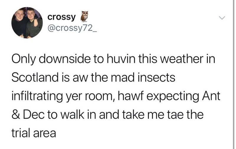 Text - crossy @crossy72_ Only downside to huvin this weather in Scotland is aw the mad insects infiltrating yer room, hawf expecting Ant & Dec to walk in and take me tae the trial area