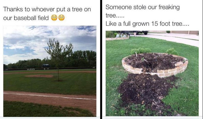 Someone had their tree stolen and planted in the middle of a baseball field