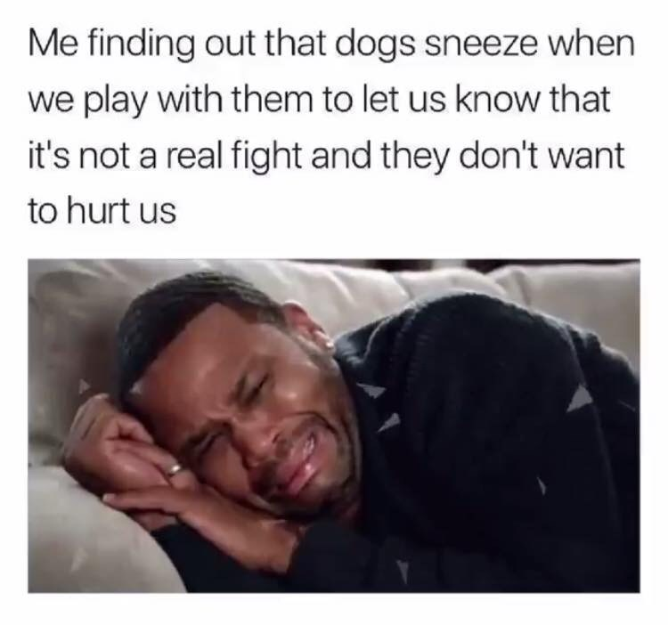 """Me finding out that dogs sneeze when we play with them to let us know that it's not a real fight and they don't want to hurt us"""