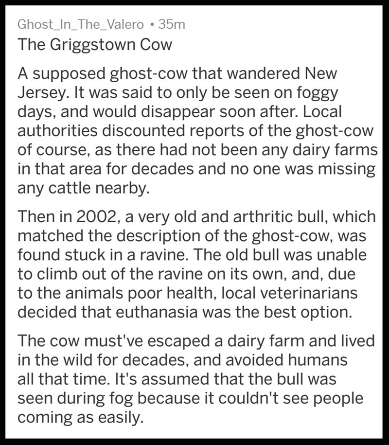 Text - Ghost_In_The_Valero 35m The Griggstown Cow A supposed ghost-cow that wandered New Jersey. It was said to only be seen on foggy days, and would disappear soon after. Local authorities discounted reports of the ghost-cow of course, as there had not been any dairy farms in that area for decades and no one was missing any cattle nearby. Then in 2002, a very old and arthritic bull, which matched the description of the ghost-cow, was found stuck in a ravine. The old bull was unable to climb out