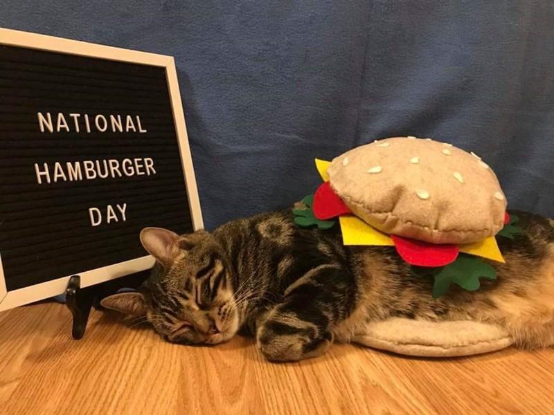 Cat dressed as a hamburger for National Hamburger Day