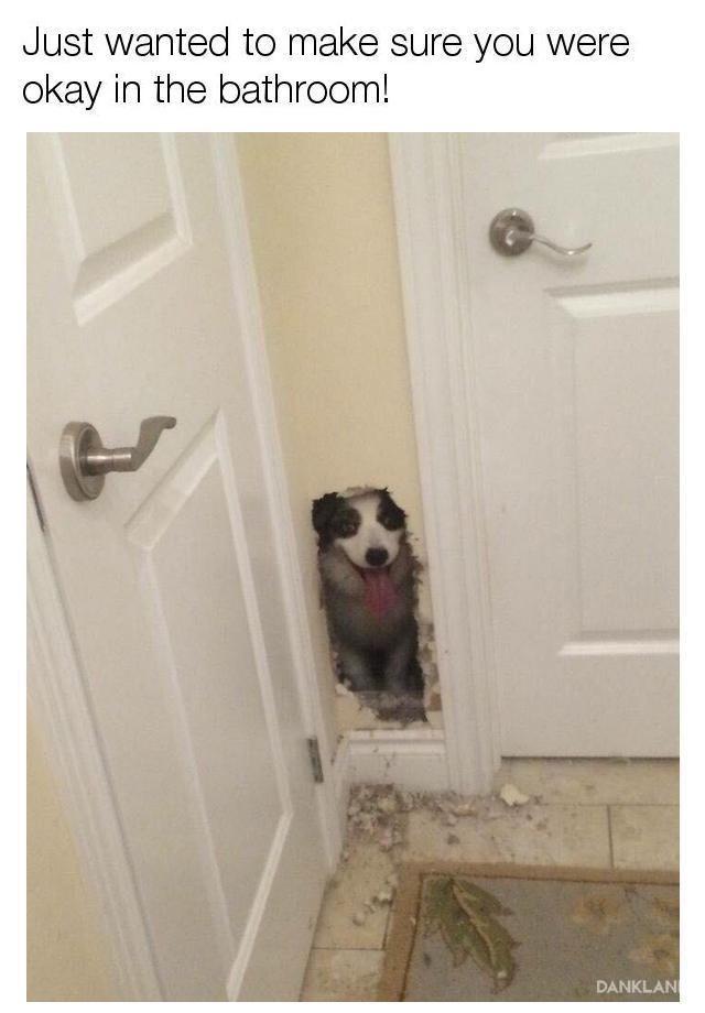 Dog chewed a hole in the bathroom wall