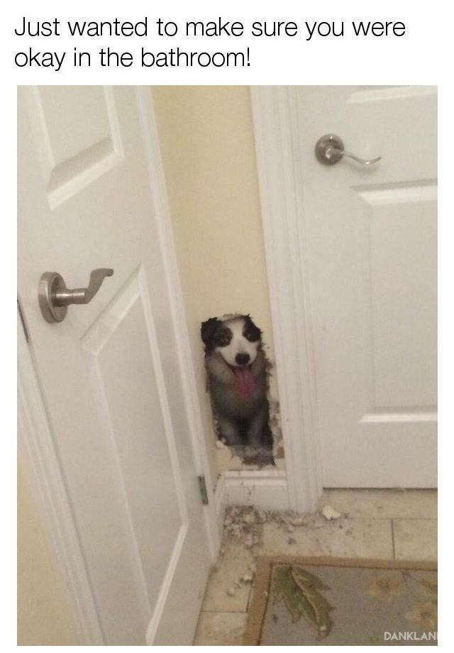 Dog chewed a hole in the bathroom wall