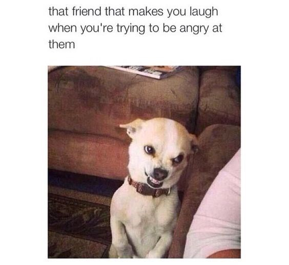 Dog - that friend that makes you laugh when you're trying to be angry at them
