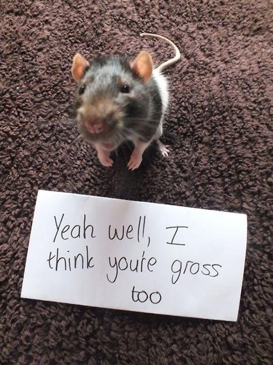 Rat - Yeah wel, I think youte gross too