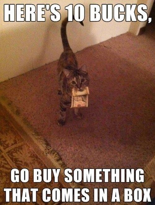 Cat - HERE'S 10 BUCKS GO BUY SOMETHING THAT COMES IN A BOX
