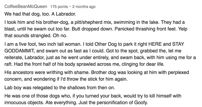 silly but cute pets - Text - CoffeeBeanMcQueen We had that dog, too. A Labrador. I took him and his brother-dog, pitt/shepherd mix, swimming in the lake. They had a blast, until he swam out too far. Butt dropped down. Panicked thrashing front feet. Yelp that sounds strangled