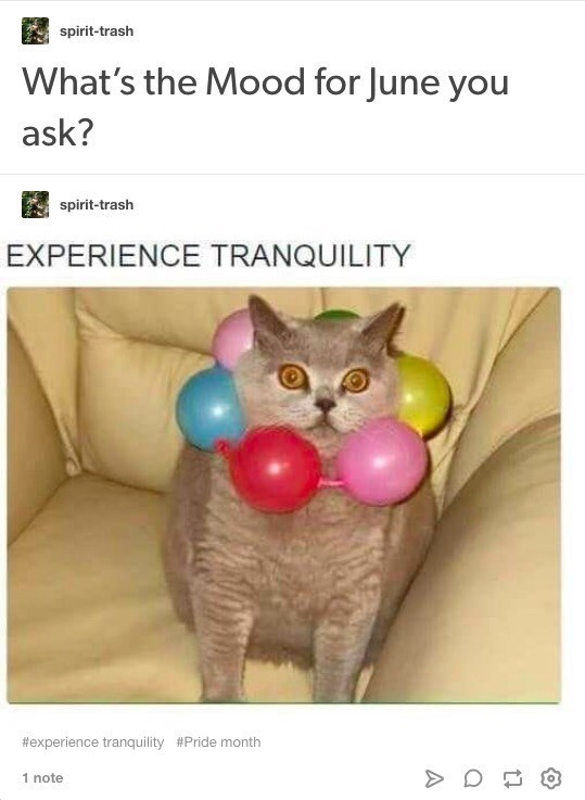 Cat - spirit-trash What's the Mood for June you ask? spirit-trash EXPERIENCE TRANQUILITY #experience tranquility #Pride month 1 note A
