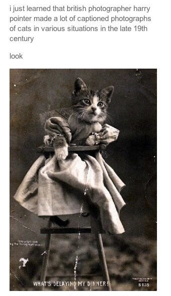 Photograph - i just learned that british photographer harry pointer made a lot of captioned photographs of cats in various situations in the late 19th century look ww WHAT'S DELAYING MY DINNER B838