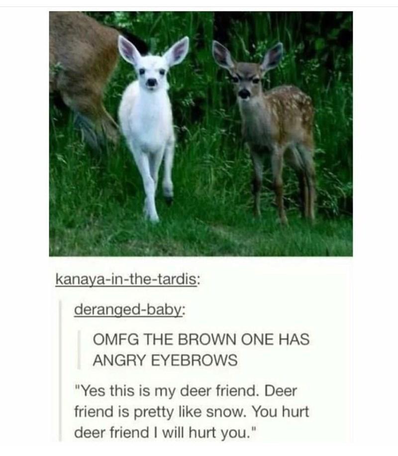 "wholesome meme - Mammal - kanaya-in-the-tardis: deranged-baby: OMFG THE BROWN ONE HAS ANGRY EYEBROWS ""Yes this is my deer friend. Deer friend is pretty like snow. You hurt deer friend I will hurt you."""