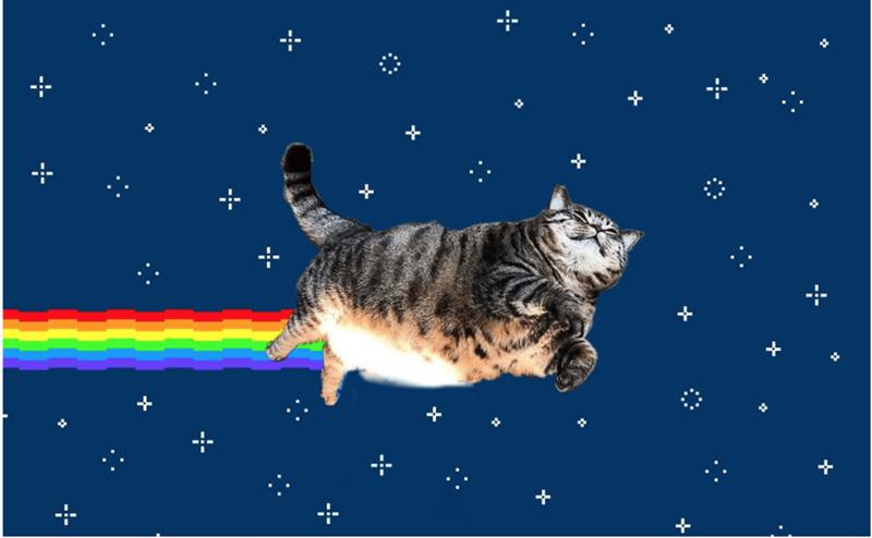 Cat - +
