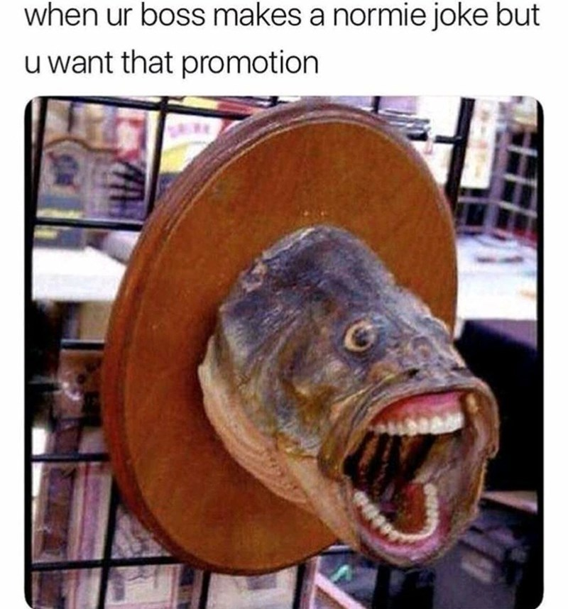 Fish - when ur boss makes a normie joke but Iwant that promotion