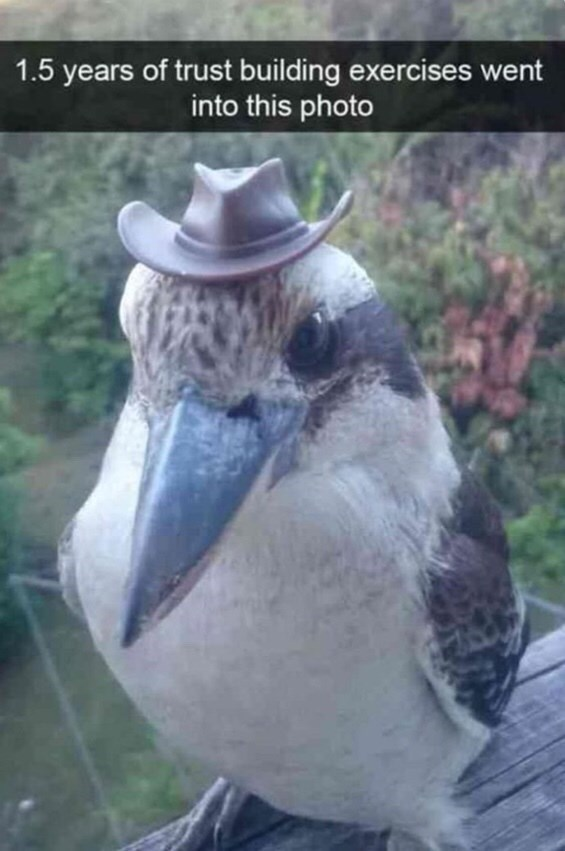 "Image of a bird with a little hat on, with the caption, ""1.5 years of trust-building exercises went into this photo"""