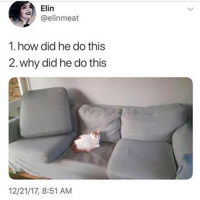 Cat sitting on a couch with one of the cushions mysteriously moved out from under him