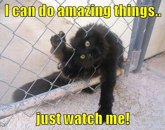 I Can Do Amazing Things Just Watch Me I Can Has Cheezburger