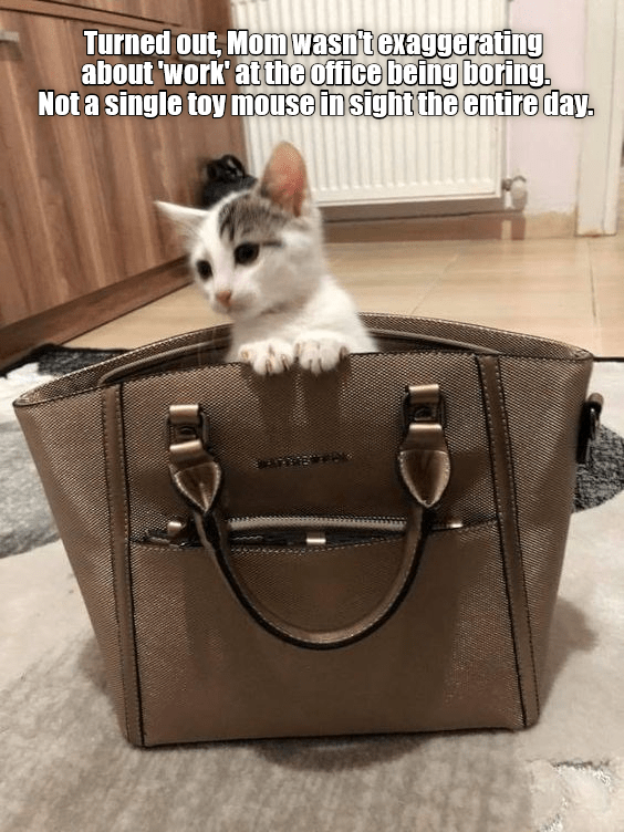 Won\'t be sneaking in her purse again any time soon