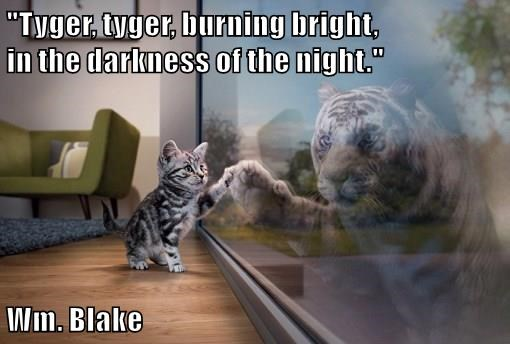 Tyger, tyger, burning bright, in the darkness of the night
