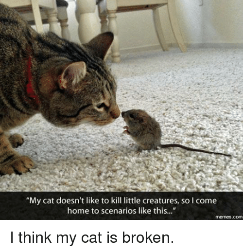 "Cat - ""My cat doesn't like to kill little creatures, so I come home to scenarios like this..."" memes.com I think my cat is broken"