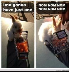 Rabbit - Ima gonna have just oneNOM NOM NOM NOM NOM NOM