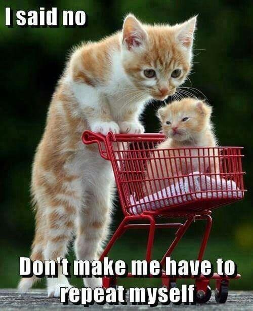 Cat - I said no Don'tmake me have to repeat myself