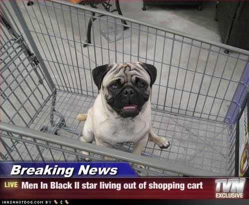 Dog - Breaking News VM LIVE Men In Black Il star living out of shopping cart EXCLUSIVE IHASAHOTDO6.CoM BY