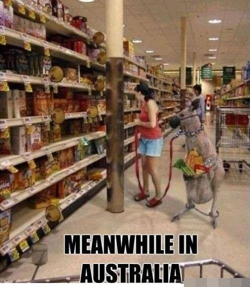 Supermarket - MEANWHILE IN AUSTRALIAT