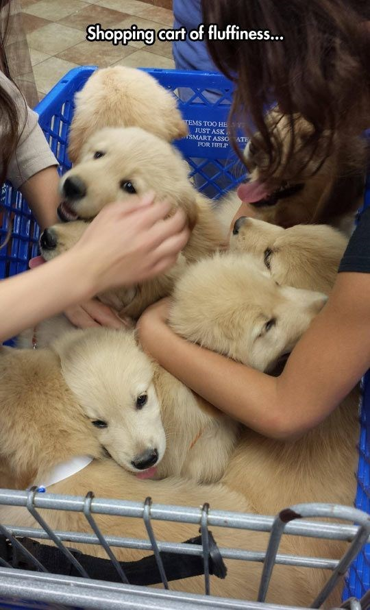 Mammal - Shopping cart of fluffiness... TEMS TOO HE S JUST ASK rSMART ASSO ATE POR HRLP
