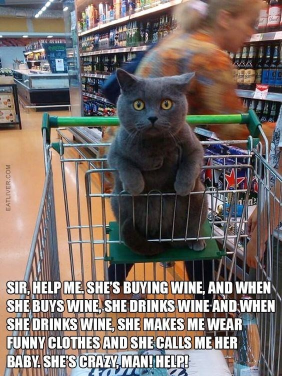 Cat - SIR HELP ME SHES BUYING WINE, AND WHEN SHEBUYS WINE SHE DRINKS WINE-AND WHEN SHE ORINKS WINE SHE MAKES ME WEAR FUNNY CLOTHES AND SHE CALLS ME HER BABY SHES CRAZYMAN! HELP! EATLIVER.COM