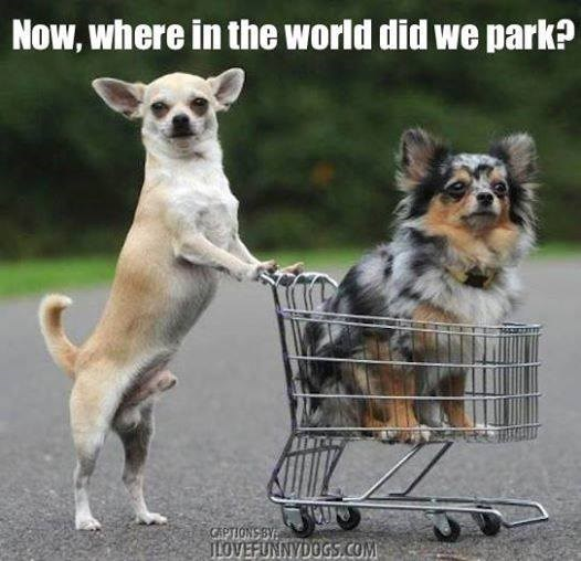 Dog - Now, where in the world did we park? GAPTIONS BY ILOVEFUNNYDOGS.COM