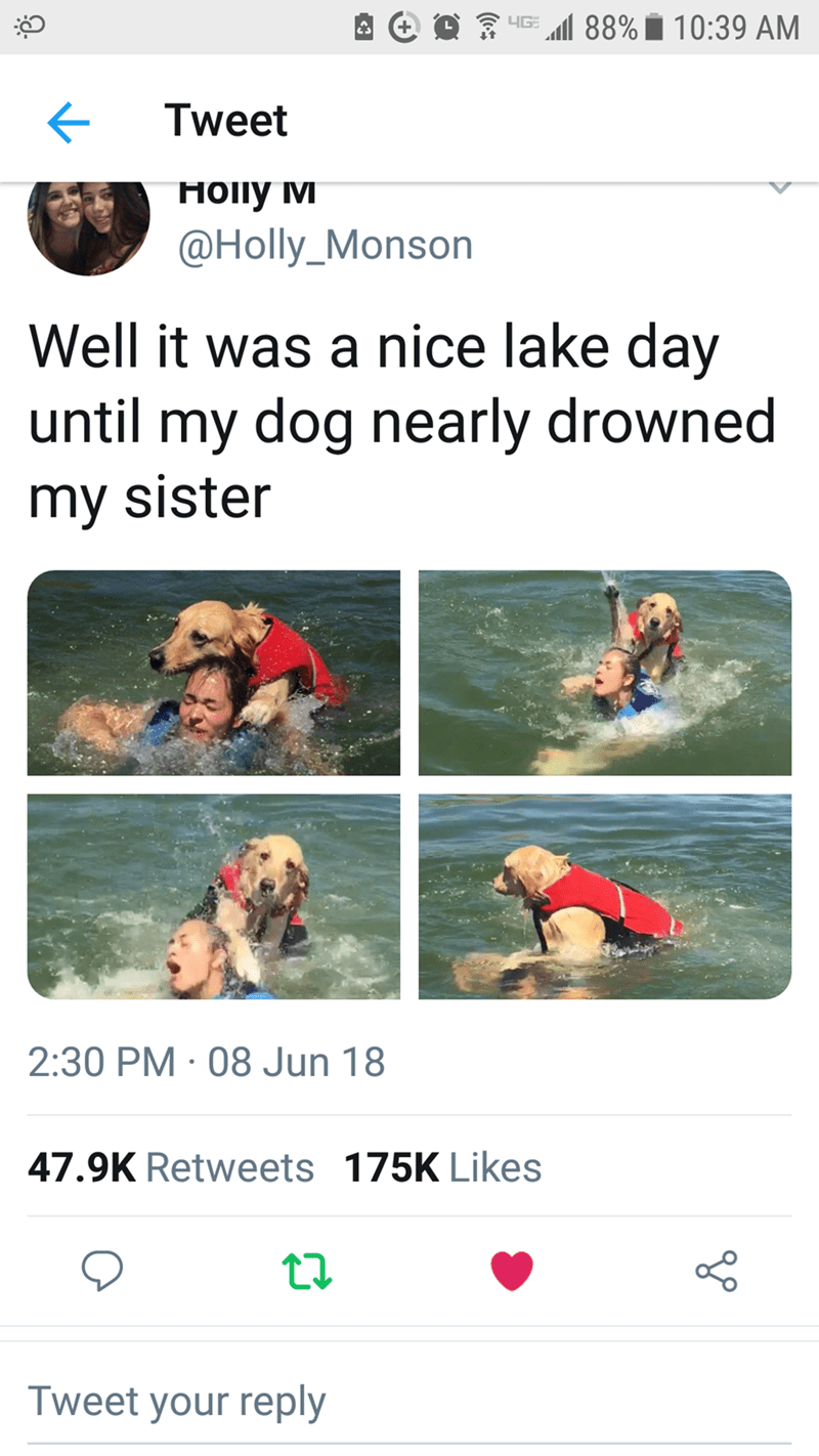 Recreation - HG 88% 10:39 AM + Tweet Hoпy м @Holly_Monson Well it was a nice lake day until my dog nearly drowned my sister 2:30 PM 08 Jun 18 47.9K Retweets 175K Likes Tweet your reply