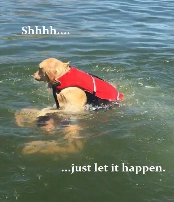 Lifejacket - Shhhh.... ...just let it happen.