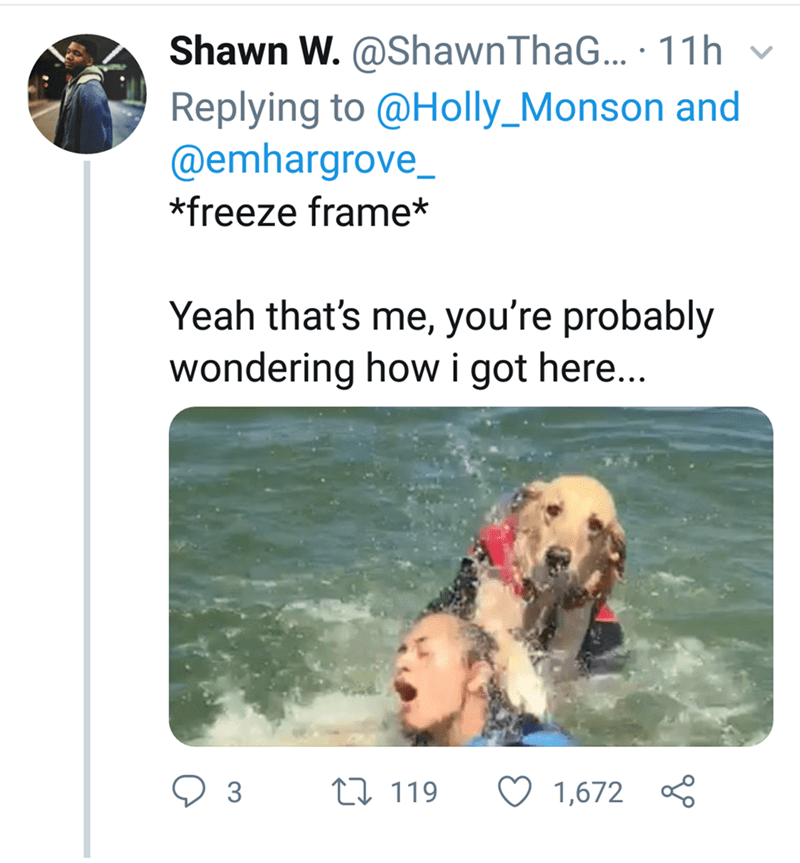 Canidae - Shawn W. @ShawnThaG... 11h Replying to @Holly_Monson and @emhargrove_ *freeze frame* Yeah that's me, you're probably wondering howi got here... 1119 1,672