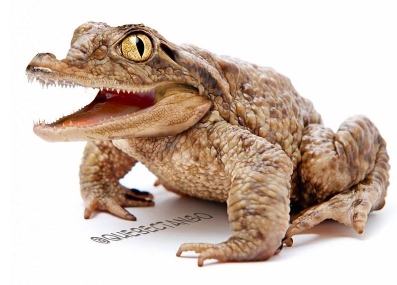 animal mashup pics - Toad - 3auERECTAiGO