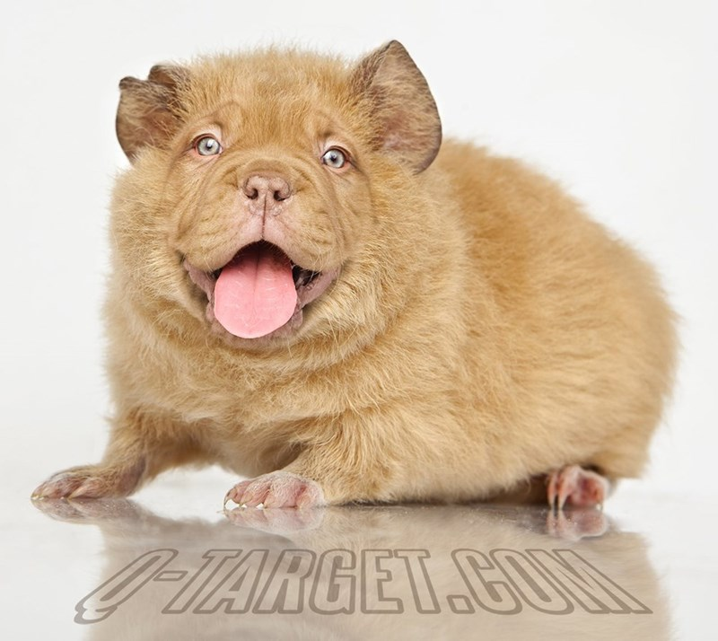 animal mashup pics - Mammal - PARGET CUM