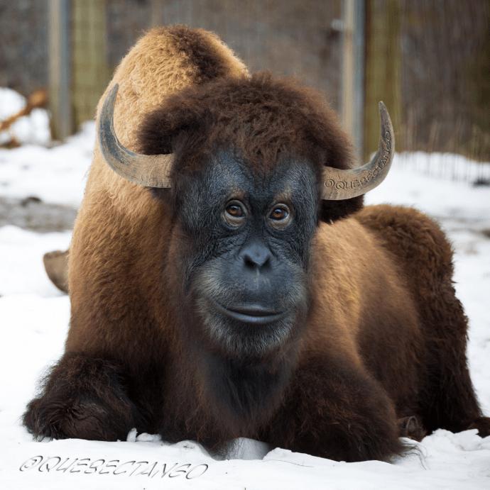 animal mashup pics - Mammal - WWESECTANSO
