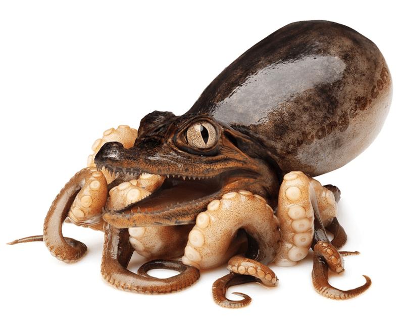 animal mashup pics - Octopus