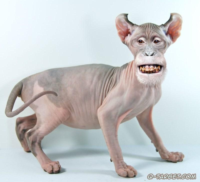 animal mashup pics - Cat