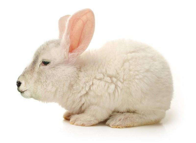animal mashup pics - Rabbit - eBECTANGO