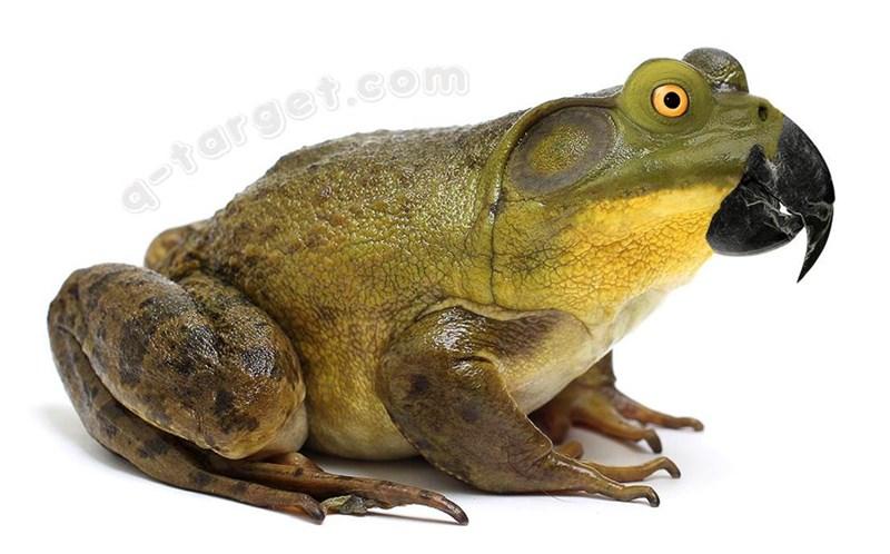 animal mashup pics - Frog - -target.com