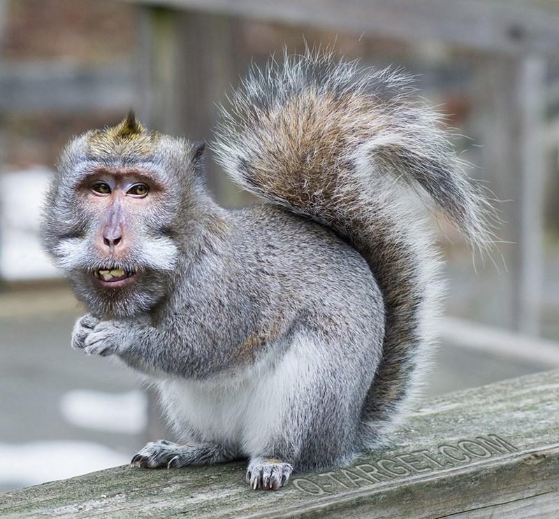 animal mashup pics - Mammal
