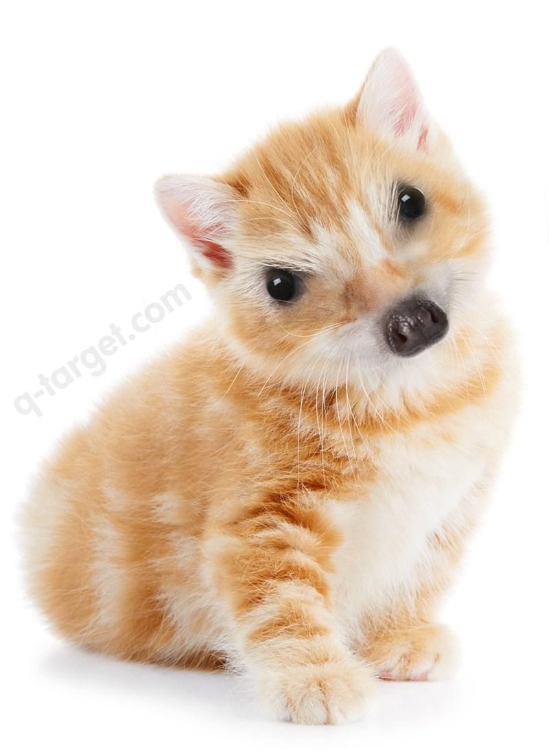 animal mashup pics - Mammal - 9-farget.com