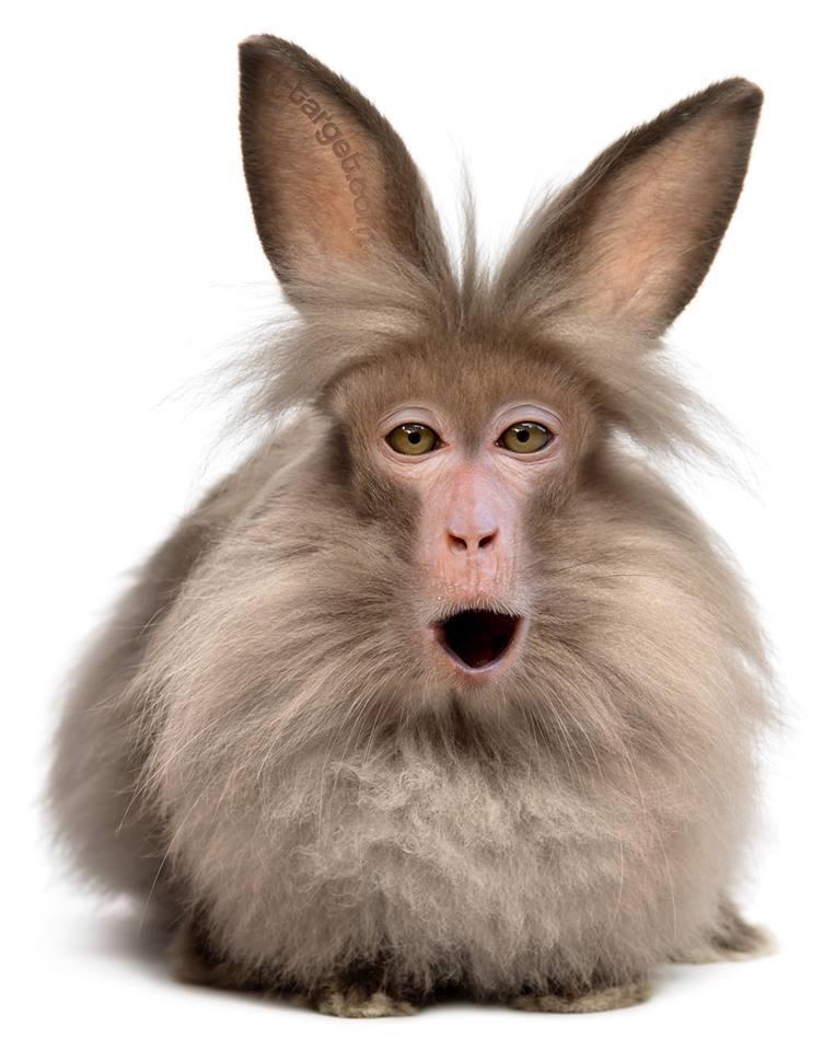 animal mashup pics - Mammal - bargeb.com