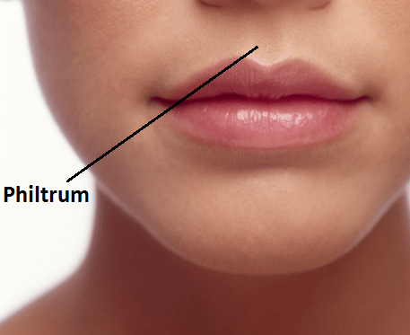 Lip - Philtrum