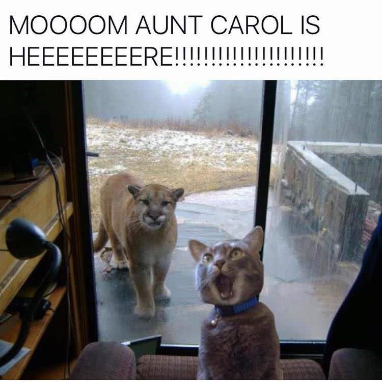 picture of cat appearing to be calling its mom to let her know a large puma has come to visit