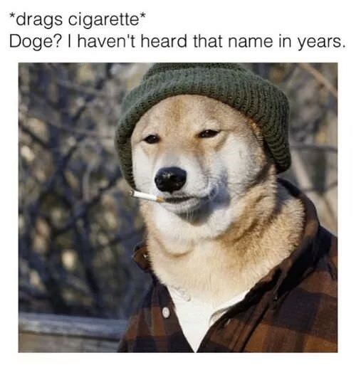 meme about shiba inu in hobo clothes smoking a cigarette and reminiscing its past as the doge meme